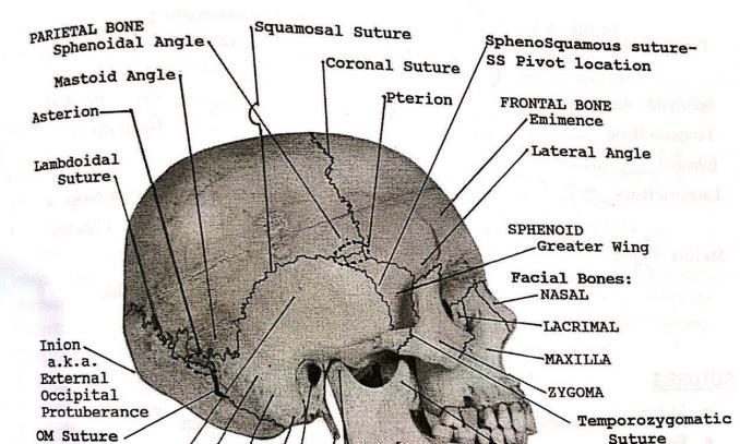 【2020年9月25-29日】CST(颅骶椎治疗)V1+V2课程通知